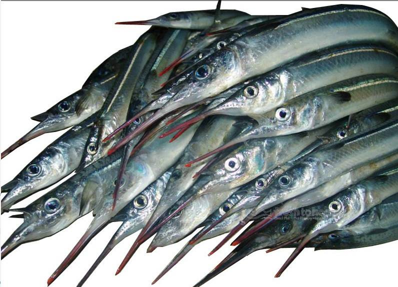 Large Garfish : Kola Meen for Rs.221:kg