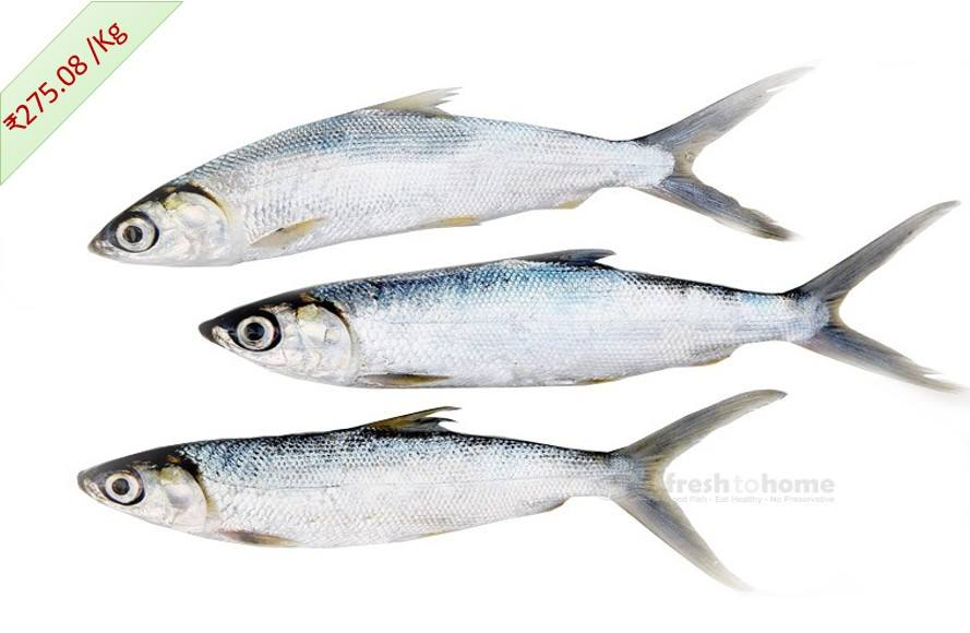 Marine Milk Fish : Poomeen