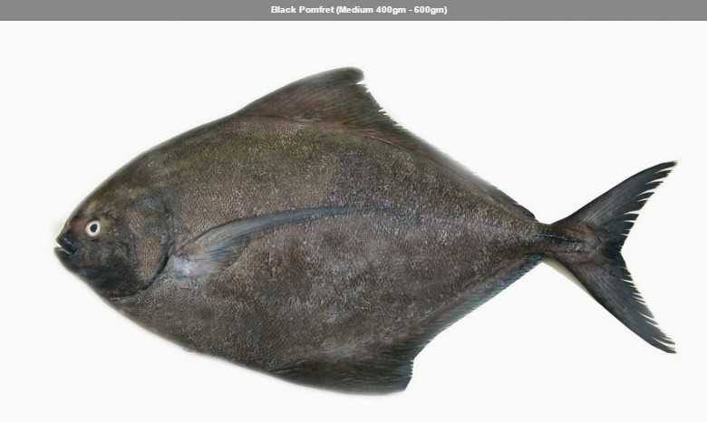 Black Pomfret (Medium 400gm to 600gm)