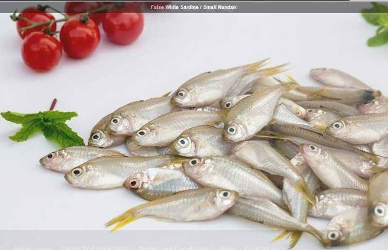 false-white-sardine-small-nandan