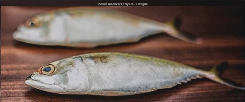 indian-mackerel-ayala-bangda