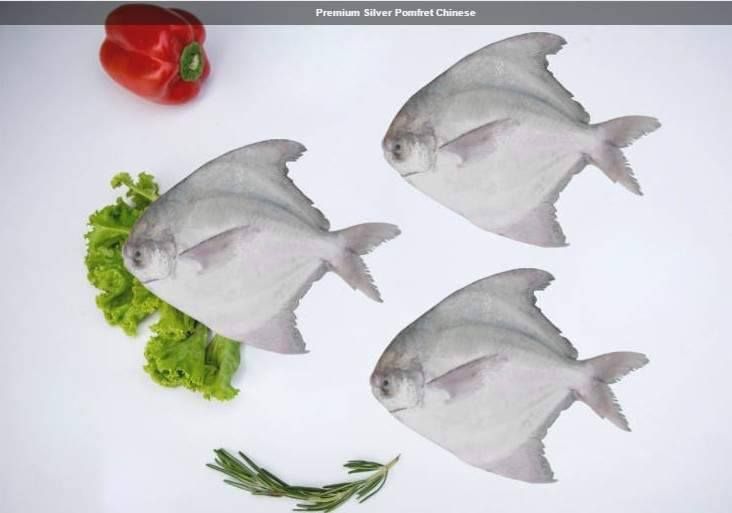 premium-silver-pomfret-chinese