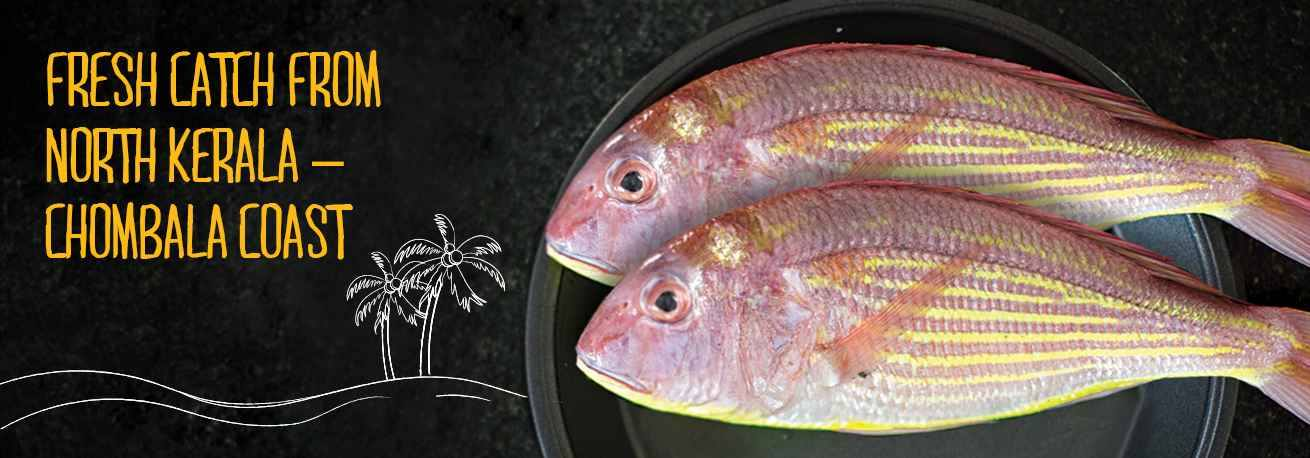 thread-finned-bream-pink-perch-kilimeen-small